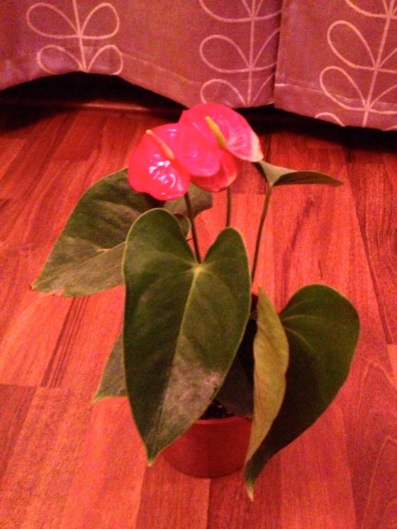 My new plant Idgie